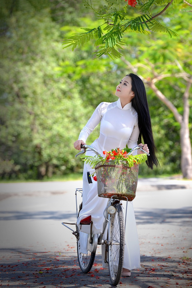 Mùa hoa phượng vĩ ở thành phố mang tên Bác - 17