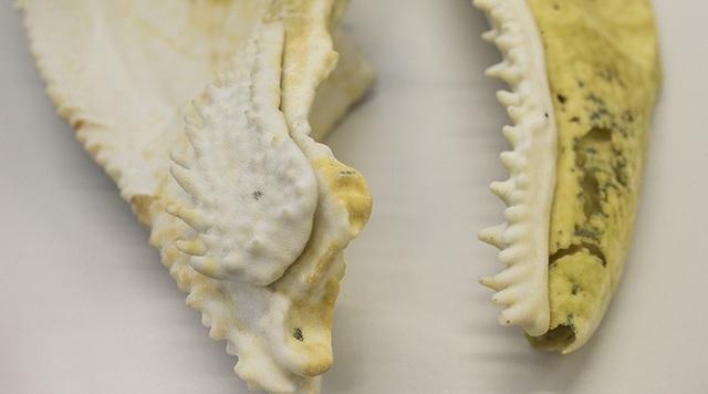 Tìm thấy mối liên hệ tiến hóa giữa một hóa thạch cá 400 triệu năm tuổi và loài người - 1