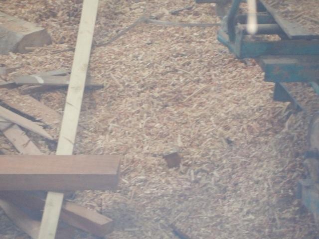 Hoạt động của xưởng gỗ gây ô nhiễm, ảnh hưởng đến đời sống của người dân sống xung quanh