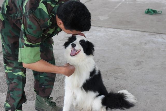 Huấn luyện viên cần mất nhiều thời gian, công sức để làm thân với các chú chó.