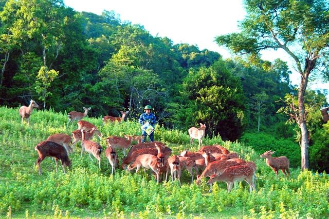 Nghề nuôi hươu đang rất phát triển ở huyện miền núi Hương Sơn, biến mảnh đất này thủ phủ nuôi hươu ở Hà Tĩnh và Miền Trung.