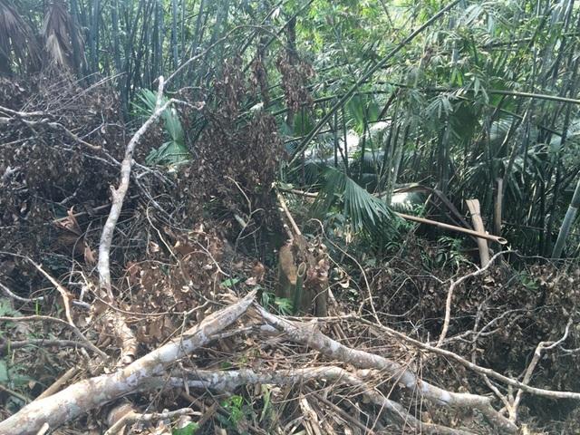 Huyện Quan Sơn cũng đã chỉ đạo kiểm điểm các tập thể, cá nhân có liên quan đến việc để xảy ra khai thác gỗ trái phép