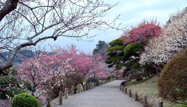 Kairakuen, một trong những khu vườn đẹp nhất Nhật Bản. Ảnh: Internet