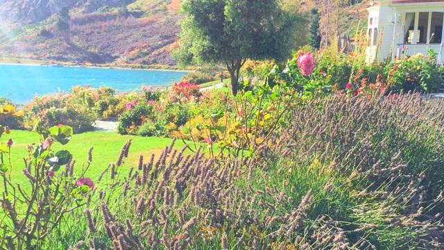 Mùa thu, hoa oải hương rực sắc tím bên những lối đi. Loài hoa với mùi hương nhẹ nhàng, tinh tế này dễ làm say lòng bất cứ du khách nào