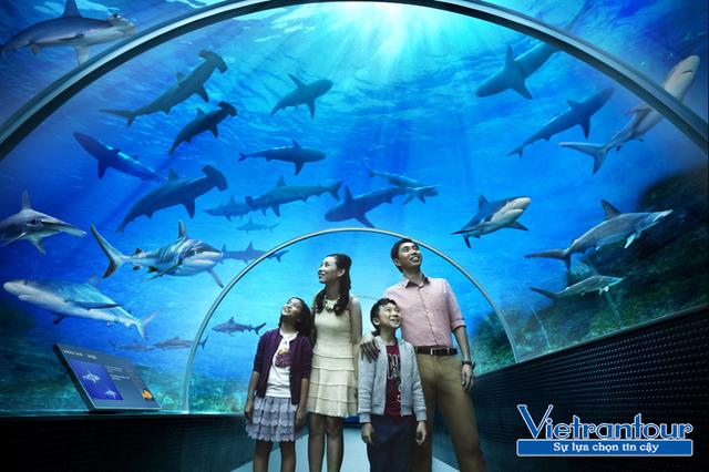 S.E.A Aquarium - 1 trong 10 thủy cung nhân tạo hấp dẫn nhất châu Á