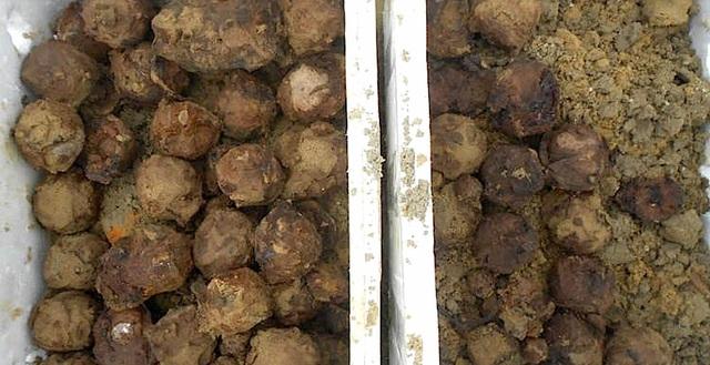 240 quả bom bi chưa nổ dưới ruộng lúa được bộ đội đưa lên bờ.