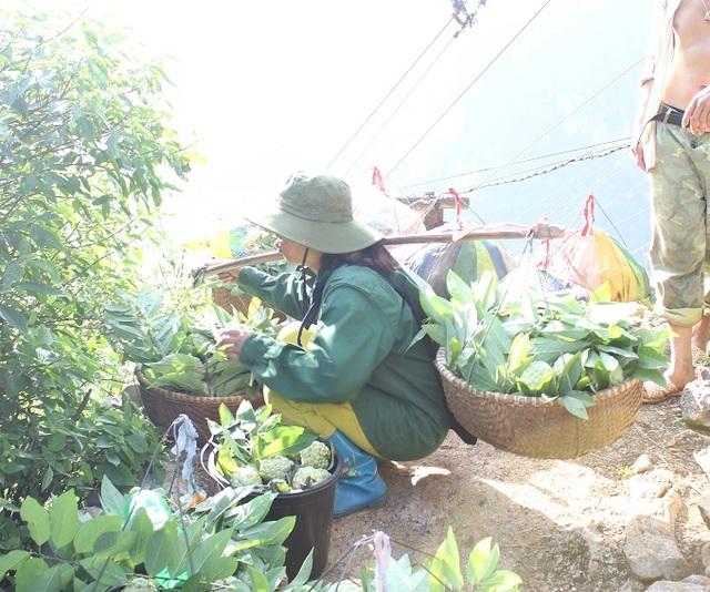 Na được gánh từ khu vực trồng ra điểm tập kết, rồi sẽ được chuyển xuống chân núi bằng cáp treo.