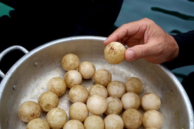 Hơn 30 quả trứng được xác định chắc chắn là trứng rùa