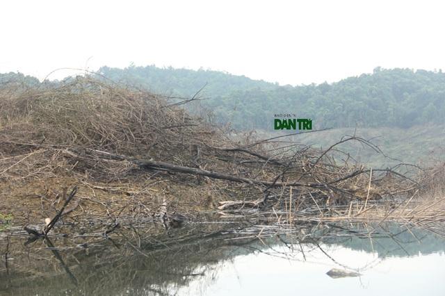 Cả một góc đồi cây cối chưa được thiêu đốt sắp chìm xuống nước.