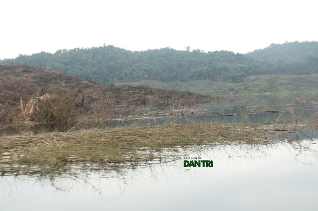 Theo cán bộ Vườn Vườn Quốc gia Vũ Quang khẳng định những rừng tre nứa như thế này càng ngâm nước càng khó phân hủy, về lâu dài đây sẽ là tác nhân rất lớn khiến nguồn nước bị ô nhiễm nặng nề.