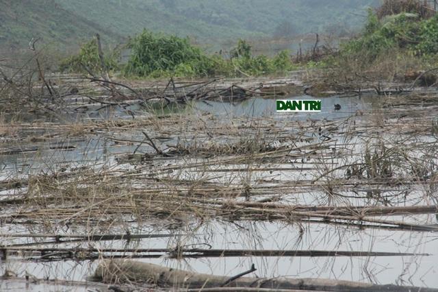 Cán bộ Vườn Quốc gia Vũ Quang cũng khẳng định, con số hơn 1500 ha mà chủ đầu tư và nhà thầu đã phát dọn là không chính xác.