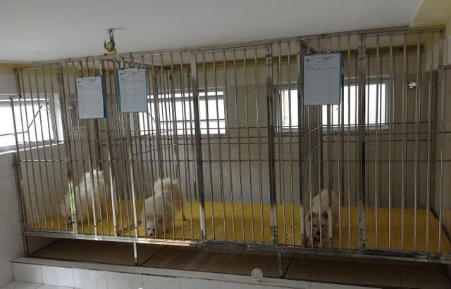 """Nhà giàu Hà Nội chi tiền triệu cho thú cưng ở """"khách sạn"""" dịp tết"""