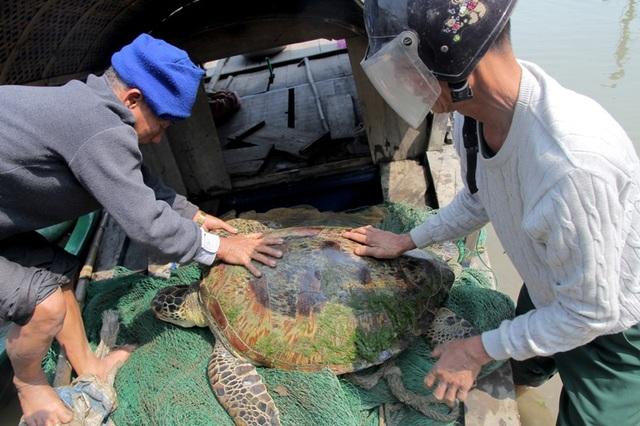 Con rùa ngay sau đó đã được thả về biển