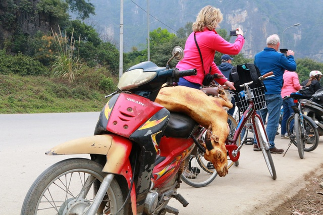 Một con dê bị giết thịt nằm lăn lóc trên chiếc xe máy cà tàng.