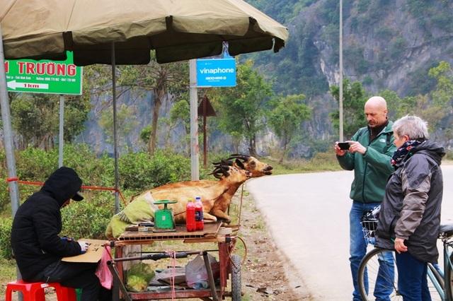 Những con dê được bày bán bên đường gây mất mỹ quan du lịch ở Ninh Bình.