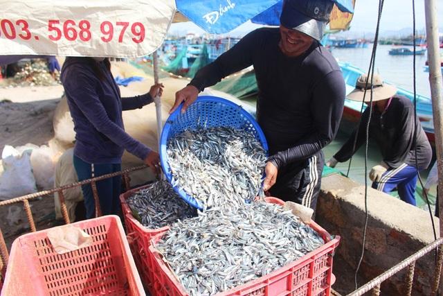 Ngư dân Nha Trang phấn khởi vì trúng đậm mùa cá cơm, mang về 5-6 triệu đồng chỉ sau vài giờ đánh bắt