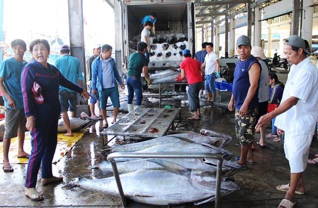 Ngư dân rộn ràng đưa cá ngừ lên cảng cá Hòn Rớ (TP Nha Trang) để bán cho thương lái, sáng 6/2