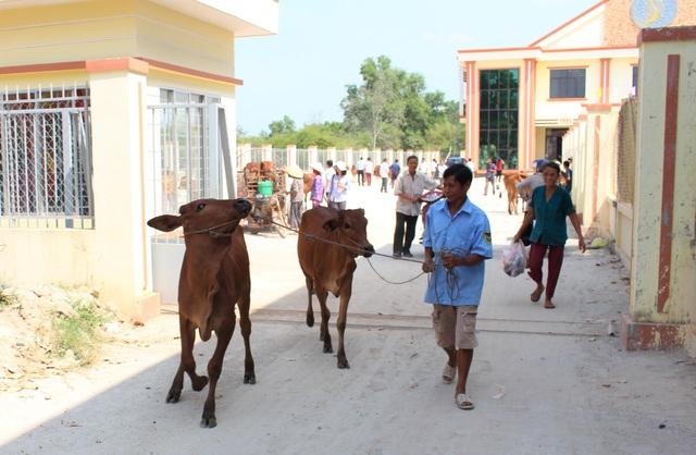 Long An: Masan Nutri-Science trao tặng 30 con bò giống cho người dân xã Lộc Giang - 1