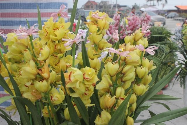 Lan vẫn được nhiều người ưa thích. Năm nay, hoa lan dao động từ 2,5 - 15 triệu đồng/ chậu (tùy theo số cành)
