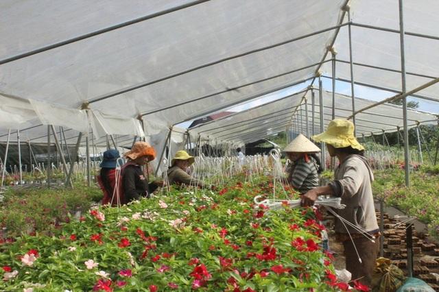 Trang trại hoa của Duy tạo công ăn việc làm ổn định cho nhiều lao động ở địa phương