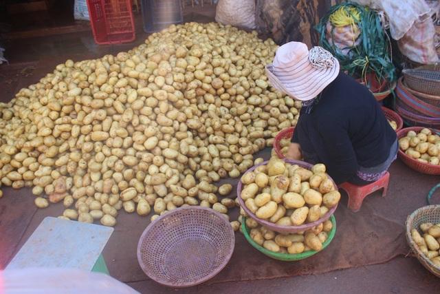 Đà Lạt nhập trên 100 tấn khoai tây Trung Quốc, tuy nhiên tất cả các mẫu tồn dư thuốc bảo vệ thực vật, kim loại nặng trong loại khoai tây này đều trong ngưỡng cho phép