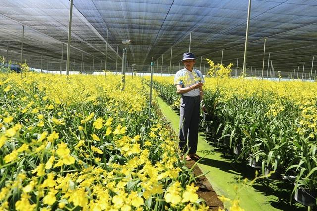 Lâm Đồng: Thu tiền tỉ từ trồng hoa lan vũ nữ xuất khẩu - 1
