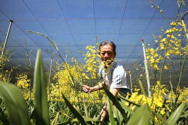 Việc mạnh dạn chuyển đổi cây trồng sang liên kết trồng lan vũ nữ xuất khẩu đã thu về cho gia đình ông Hải tiền tỷ mỗi năm