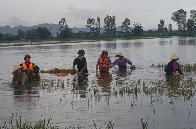 Cảnh sát PCCC tỉnh Thanh Hóa đã xuống đồng giúp dân gặt lúa