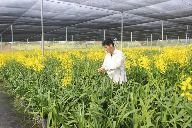 Anh Đường đang chăm sóc vườn lan vũ nữ của gia đình