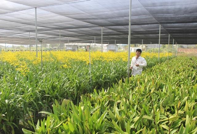 Lâm Đồng: Thu tiền tỉ từ trồng hoa lan vũ nữ xuất khẩu - 2