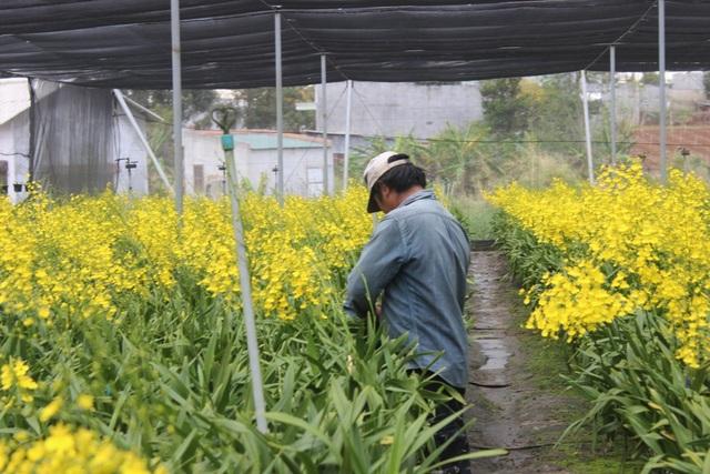 Ngoài việc đem lại thu nhập cao, mô hình trồng lan vũ nữ còn tạo công ăn việc làm ổn định cho nhiều lao động ở địa phương.