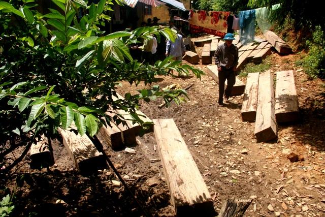 Gỗ lậu được phát hiện ở khu vực rừng phòng hộ Sông Tranh, thời ông Chẩn làm giám đốc BQL rừng