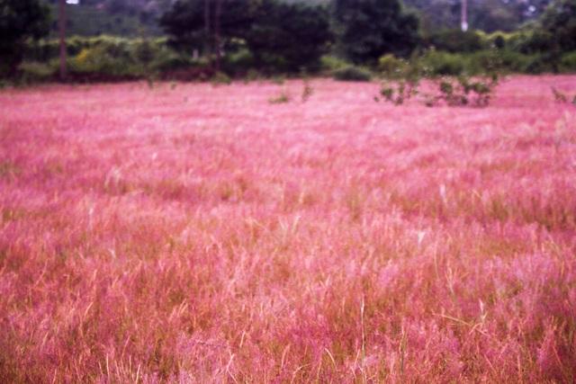 Đồi của hồng tại xã Glar được mệnh danh như đồi cỏ Đà Lạt thứ 2 trên Cao Nguyên