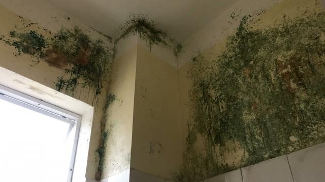 Tường, trần nhà nhiều chỗ đã rấm mốc, rơi từng mảng sơn ...
