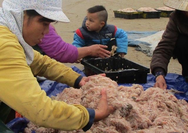 Những con moi được bà con ngư dân đánh bắt vào bờ còn tươi sống, ngay sau đó, moi được các thương lái thu mua đưa về chế biến thành mắm tôm hoặc sấy khô để bán.