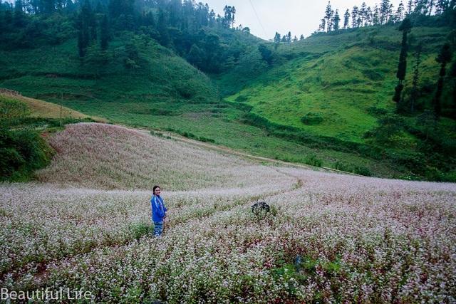 Tận mắt cánh đồng hoa tam giác mạch tuyệt đẹp ở rẻo cao Tây Bắc - 5