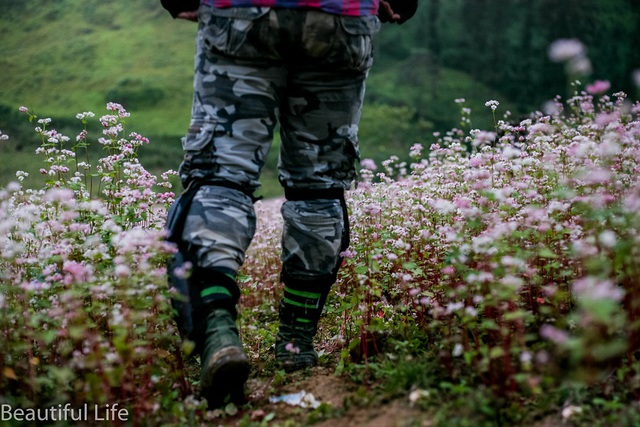 Tận mắt cánh đồng hoa tam giác mạch tuyệt đẹp ở rẻo cao Tây Bắc - 7