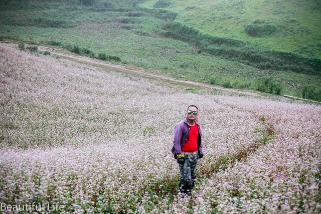 Thời điểm này, cánh đồng hoa tam giác mạch thu hút rất đông khách du lịch từ khắp mọi nơi đến tham quan, chiêm ngưỡng.