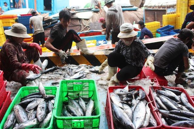 Ngư dân liên tiếp thua lỗ vì cá ngừ đại dương ở Trường Sa mất mùa - 4