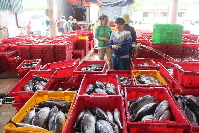 Ngư dân liên tiếp thua lỗ vì cá ngừ đại dương ở Trường Sa mất mùa - 1