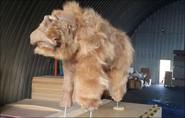 Xác tê giác chôn vùi 34000 năm dưới lớp băng tuyết còn nguyên lông và sừng - 1