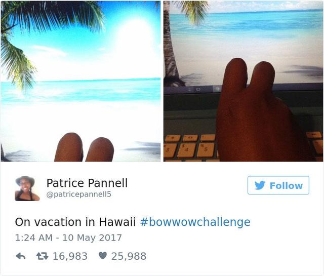 Người ta đi nghỉ ở Hawaii đấy... Ảnh chụp từ laptop.