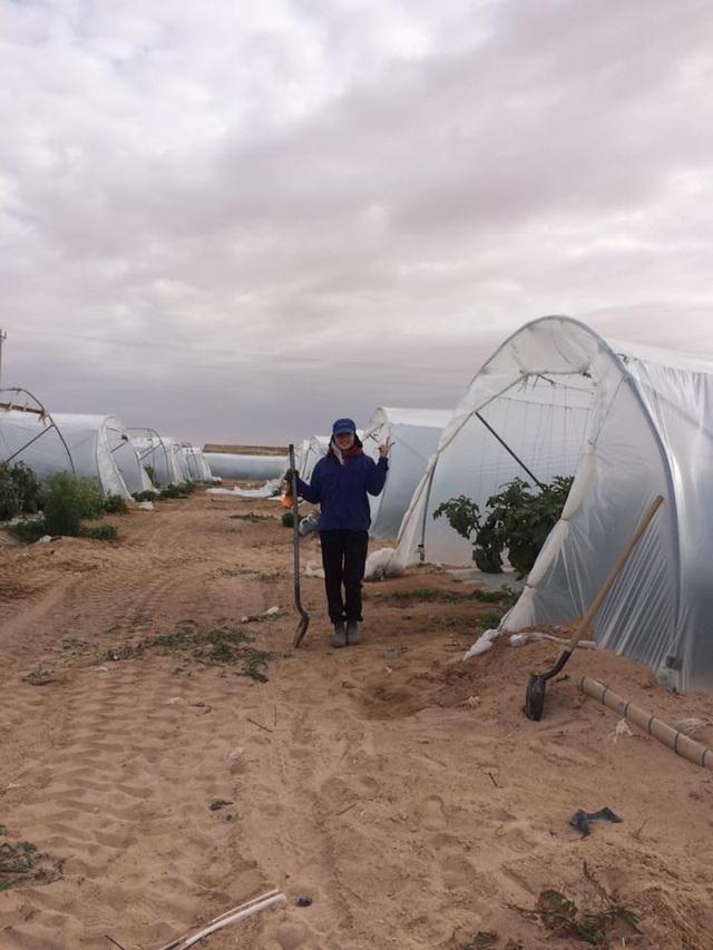 Mô hình trồng dưa hấu trên cát