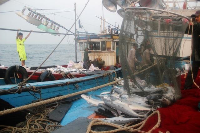 Chỉ trong chuyến biển kéo dài 2 ngày, ngư dân Quảng Trị đã đánh bắt được mẻ cá bè hơn 150 tấn