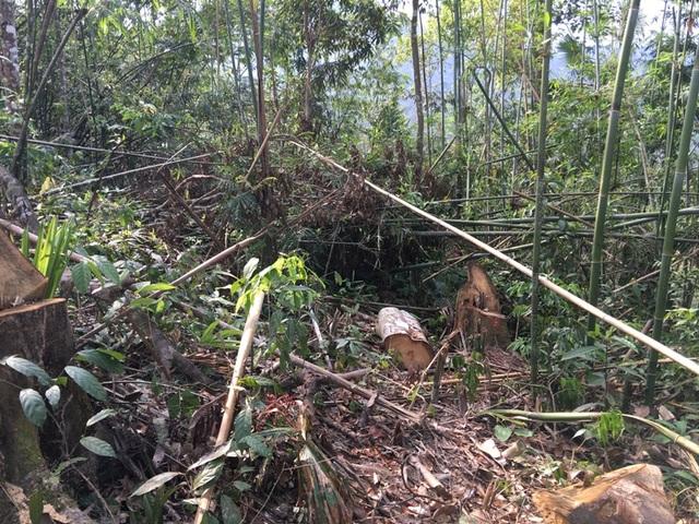 Hạt kiểm lâm huyện Quan Sơn đã xử phạt hơn 32 triệu đồng đối với các đối tượng khai thác gỗ