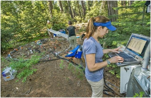 Khí thải carbon từ đất có thể tăng lên nhiều hơn mức mà chúng ta nghĩ trước đó khi nhiệt độ tăng cao. Caitlin Hicks Pries (cạnh máy tính) và các đồng nghiệp theo dõi phát thải từ một khu rừng ở chân núi Sierra Nevada.