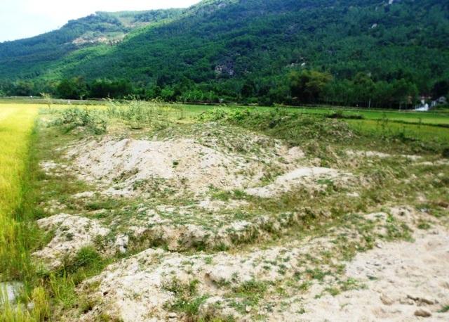Nhiều đám ruộng chưa khắc phục kịp thời nên bỏ hoang