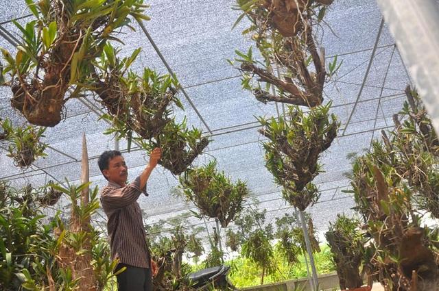 Vườn lan của thầy giáo Cường đang có khoảng trên 5.000 giò lan (Ảnh: Danviet)