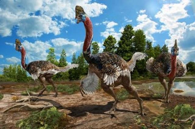 Corythoraptor jacobsi – loài khủng long trông giống như đà điểu đầu mèo.