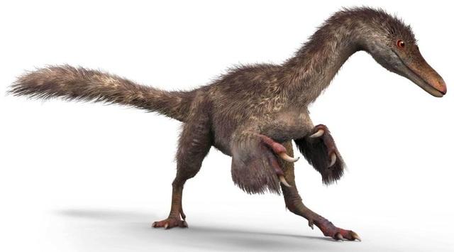 Minh họa về một con khủng long coelurosaur – một loài họ hàng có lông vũ của Tyrannosaurus Rex.